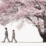 桜 in 好きなコブクロの曲 by RacingSpirits